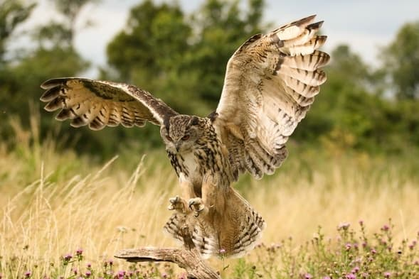 Night Hunting And Owl Attacks Should You Worry The